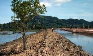 WWF Living Planet Report Mangrove destruction for shrimp farming in Thailand
