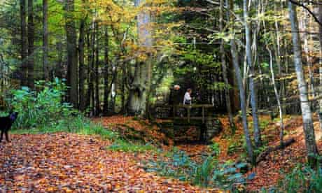 Forestry commission : Walkers in a forest, UK