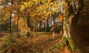 Forestry commission : Autumn colours at Loch Katrine, forest in Scotland, UK