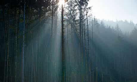 Wild Ennerdale forest : Joe Cornish, capturing the spirit and atmosphere