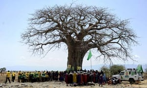 MDG : postcolonial Africa : Maasai people gather under a baobab tree during a political rally, Kenya