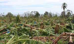 MDG : Hurricane Tomas has ripped up virtually every banana tree in St Lucia and St Vincent
