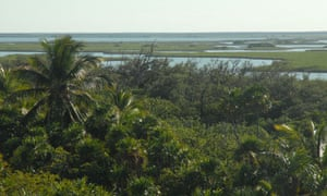 cancun cop16 : tourism beaches and mangroves