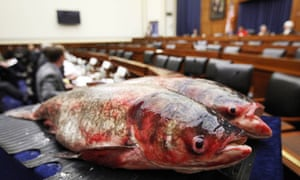 Two Asian carp are displayed on Capitol Hill in Washington