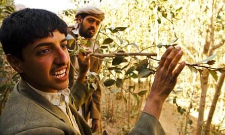 Yemen water crisis and qat production: Nabil Ali Rafik,  a qat farmer from Wad Dahr