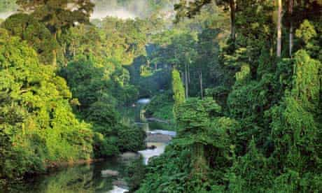 Borneo's New World : Newly Discovered Species in the Heart of Borneo WWF reports, Malaysia