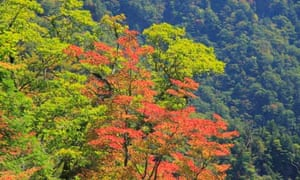Biodiversity in focus : Autumn tint of forest of Kochi Prefecture in Japan