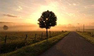Biodiversity  in focus : Countryside near Vittel, France, at dawn