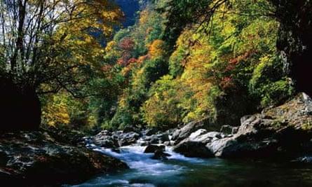 Shennongjia Nature Reserve, Yichang, China