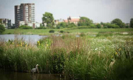 The London Wetlands Centre Celebrate Their 10th Anniversary