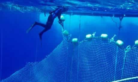 Sea Shepherd activist cuts blue tuna fishing net during Mediterranean Bluefin Tuna Defense Campaign