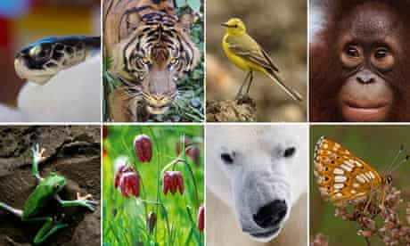 Biodiversity 100
