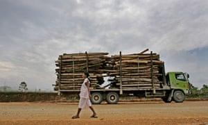 MDG : Governance, deforestation for paper factory