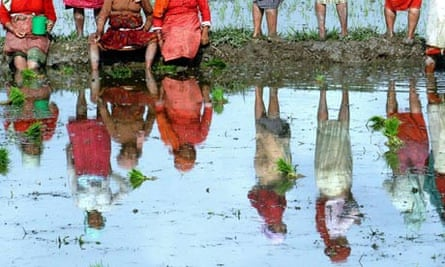 MDG Agriculture : Nepalese Women Farmers Resting During Paddy Rice Plantation