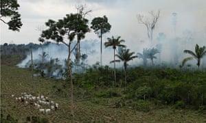 Biodiversity 100 : Brazil: Deforestation