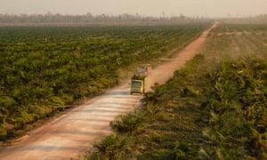 Biofuels fail green standard