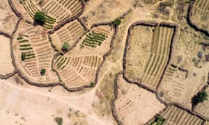MDG: Aerial view of irrigated gardens along the Niger River in Mali,