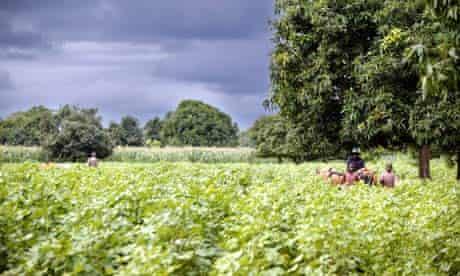 MDG : Mali : Organic Cotton Farm