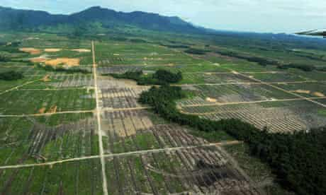 REDD and Deforestation in Indonesia : receding forest  in West Kalimantan