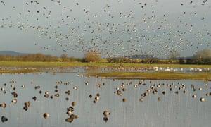 December Green shoots on Wetland in winter : Severn Estuary wetland