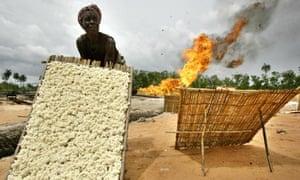 MDG : Cassava in Nigeria