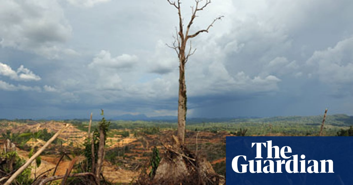 Malaysian palm oil destroying forests, report warns | Environment