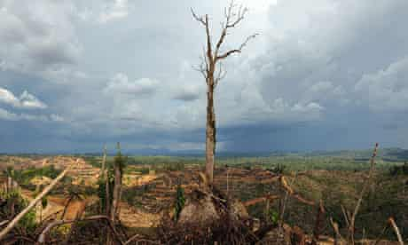 deforestation for palm oil  plantation near Lapok in Malaysia's Sarawak State