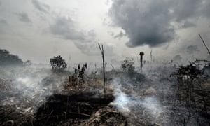 MDG: Forest : Peatland deforestation in Indonesia