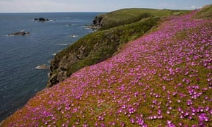 Damian Blog : Cornwall's natural reserve Lizard Point