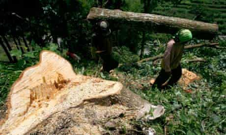 illegally cut timber at the protected forest in Arjuna mountain, East Java, Indonesia