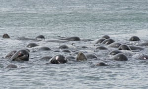 SPCA monitores up to 100 pilot whales in danger of becoming stranded off the South Uist coast