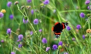 Green Shoots on Butterflies