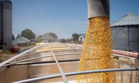 MDG : Biofuel production : Corn is loaded into a truck in South Dakota, US,