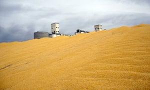 MDG : Biofuel production : Surplus Corn Harvest in Northeast Colorado, US