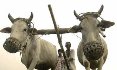TMDG : IFAD on smallholder farmers on the frontline of environment
