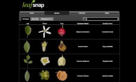 Leo Blog : leafsnap mobile phone app
