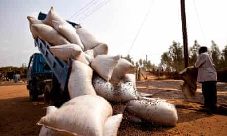 MDG : Tax in Uganda : Uganda Coffee Production And Harvest
