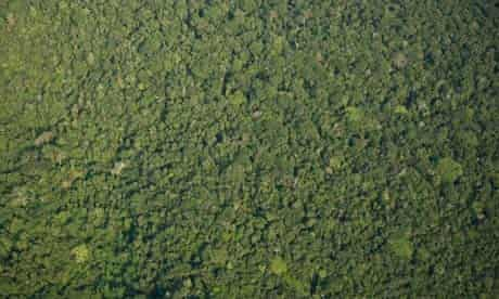 Damian blog : Eco search engine Ecosia to save rainforest in Para state Brazil