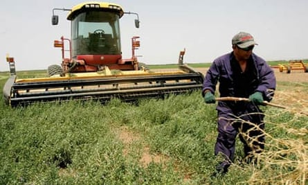 MDG : Landgrab in Sudan : employee from the Phillipines works in an agricultural field in al-Waha