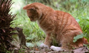 Leo blog : Are pets bad for the environment : A cat plays with a mouse in a garden