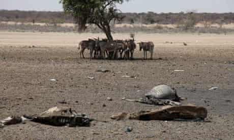 MDG : Drought in East Africa , Kenya
