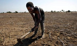 MDG : Living with less than a dollar a day , farmer in Malawi