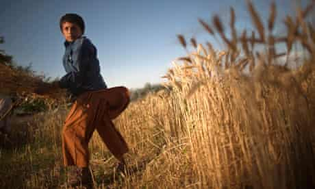 MDG : Living with less than a dollar a day , farmer in Afghanistan