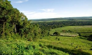 MDG : sugarcane plantation in Uganda