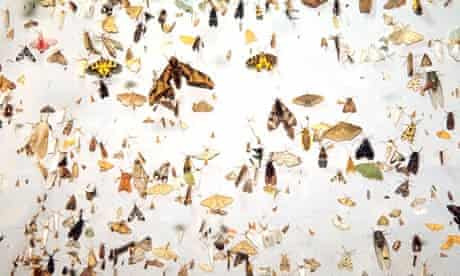 Census of Marine Life claims 8.7m species on earth  : Moths, Cicadas, and other tropical insects