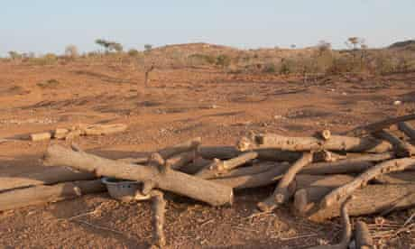 MDG : Burkina Faso : Deforestation and gold mining