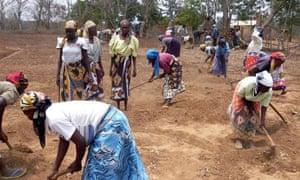 MDG : Mark Tran in Kenya : Farmers practicing digging zai pits in Kitui