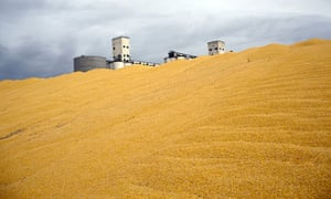 Damian blog on biofuel in USA : Harvested corn in Colorado
