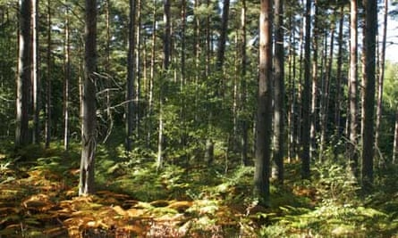 Damian blog on forestry sell off : Worcestershire Wyre Forest woodland , Worcestershire