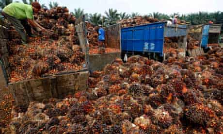 Damian blog  on Palm Fruit Plantation And Palm Oil Production